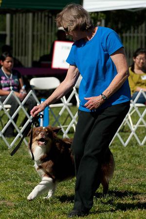 Dogs Can Dance Goldenacresdogs